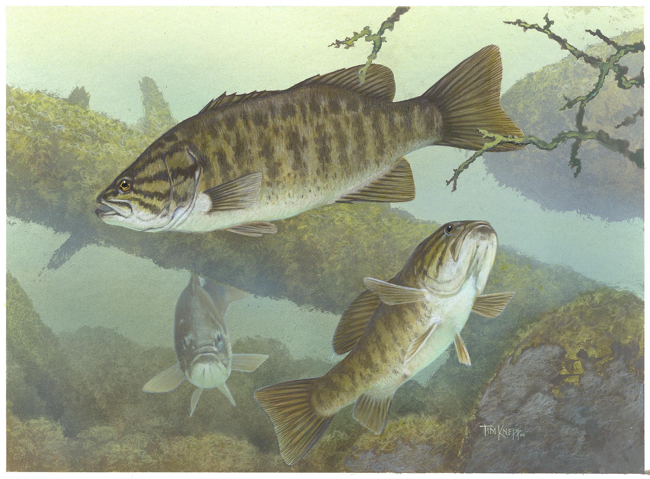 Habitat range characteristics for Fish s wild