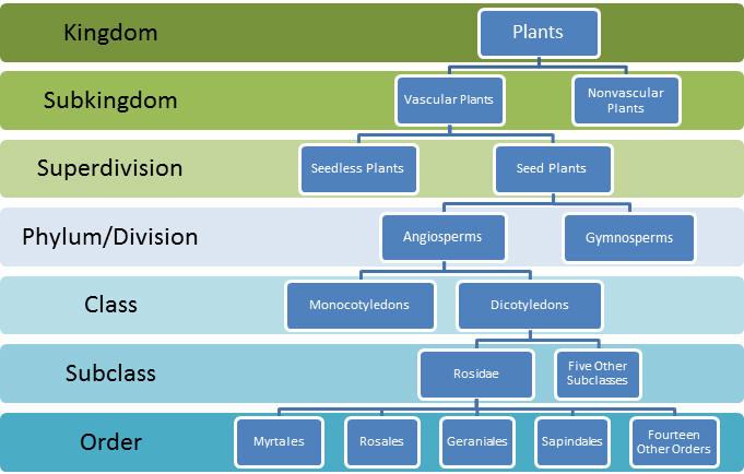 Phylum Characteristics amp Classification  Video amp Lesson