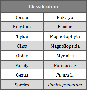 Taxonomy of plants kingdom plantae for Domon kingdom