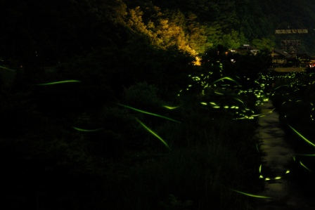 Firefly Facts: Fireflies are disappearing!
