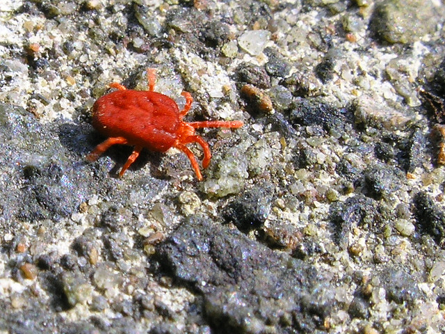 Red spider mite for How to stop spiders coming in your home
