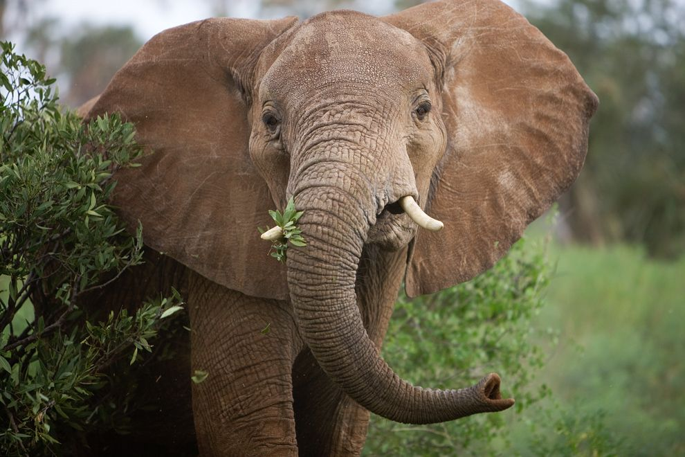Forest Elephant Interactions
