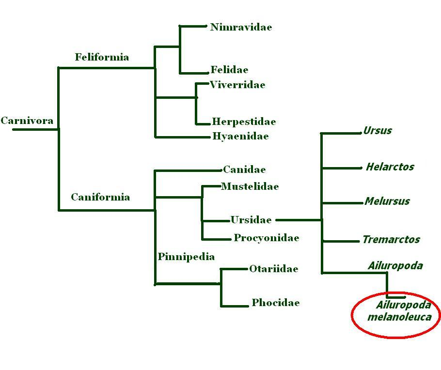 http://bioweb.uwlax.edu/bio203/s2007/barger_rach/Pictures%20for%20webpage/phylogenetic%20tree.JPG