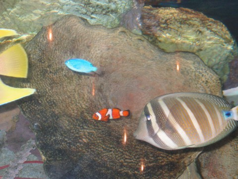 Habitat for Virginia saltwater fishing