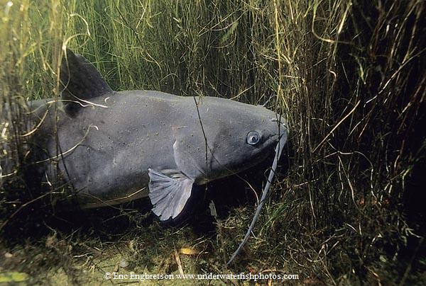 Where do fish live discover boating do catfish live in for What kind of fish live in ponds