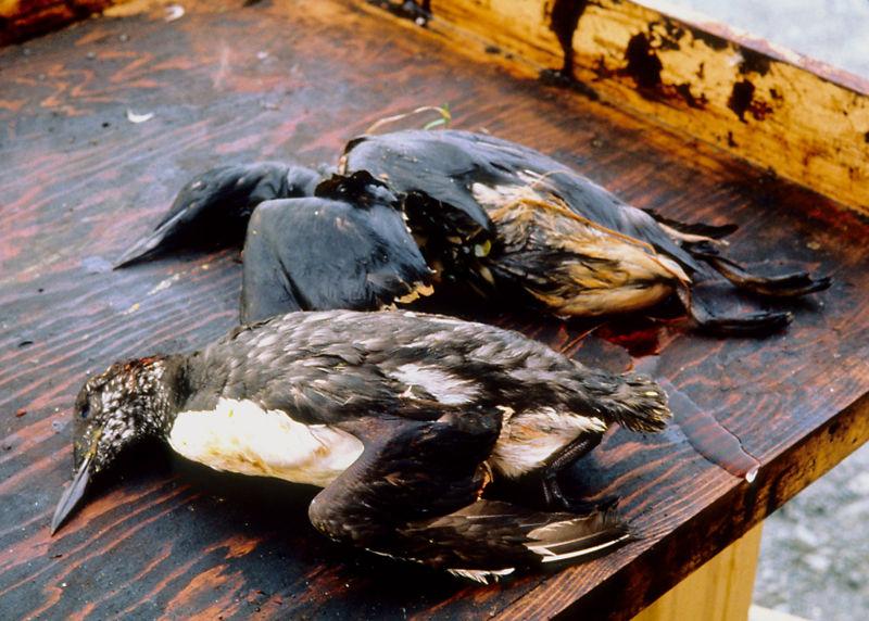 -Exxon Valdez oil spill