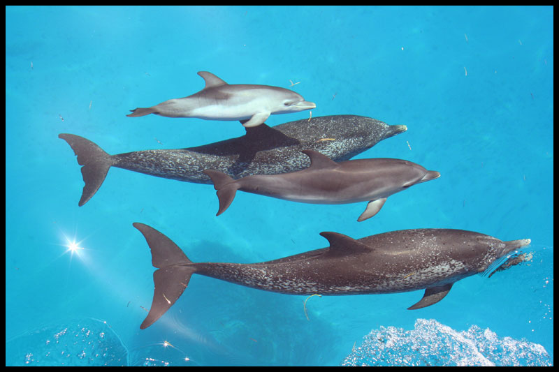 Fish dolphins eat for What do wild fish eat