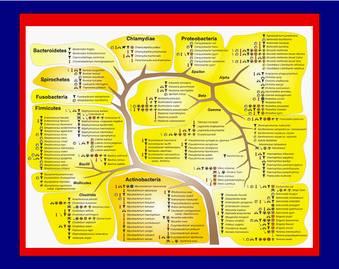 To view this phylogenetic tree in high resolution and see how