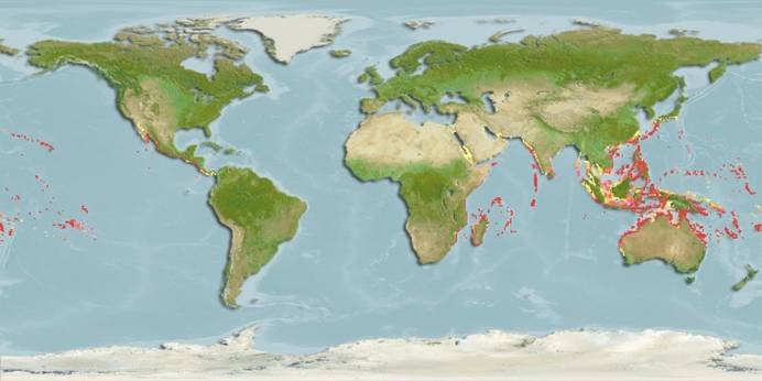 A map showing the distribution of the reef stonefish in the Indo - Pacific coastal waters. Source.