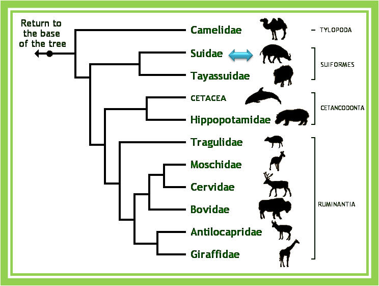 an analysis of the camel mammals in the kingdom of animalia Fun facts about mammals including photos and printable activity worksheets  suitable for  animal classes are groups of animals that scientists consider to be  alike in some important ways mammals  camels live in hot areas  theme  units.
