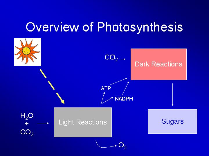 Photosynthesis Light Reaction Equation