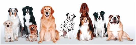Name Your Dog Generator