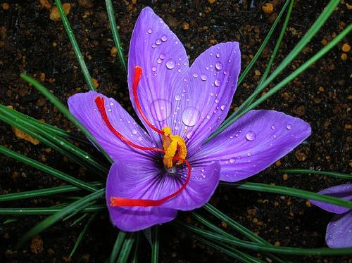 http://bioweb.uwlax.edu/bio203/s2012/geenen_rach/Mardeross.com%201.jpg