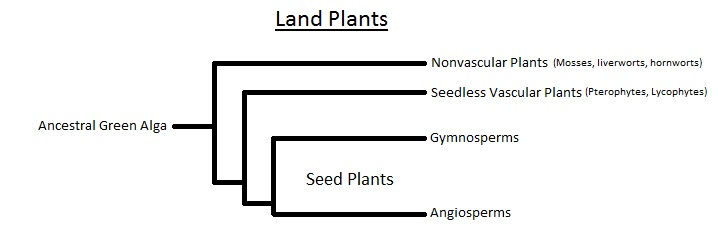 phylogenetic tree of land plants wwwpixsharkcom