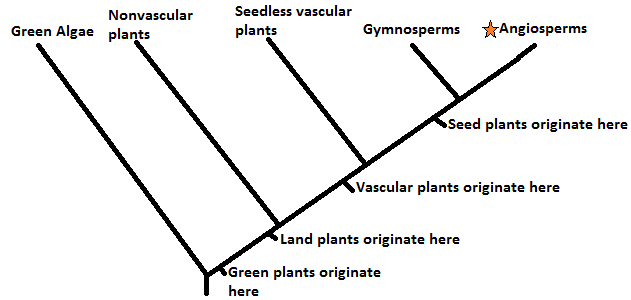The gallery for --> Angiosperm Phylogeny