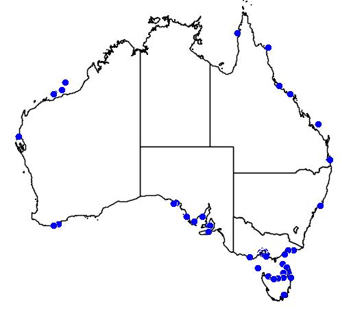 Blue Ringed Octopus Location