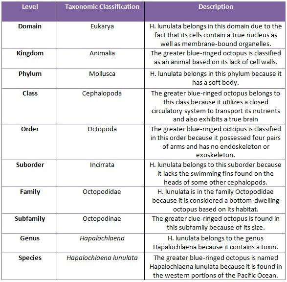 insect classifying