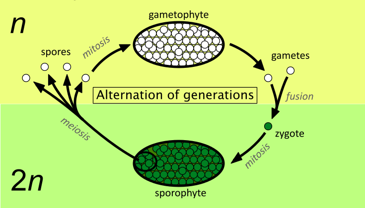 The Part In The Water Cycle That Involves Plants 60