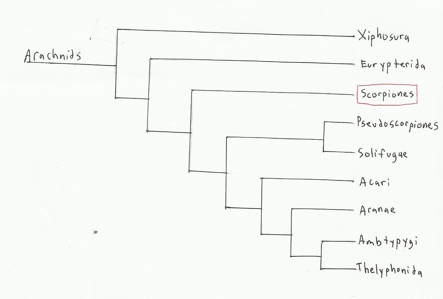 class arachnida diagram wiring diagram rh blacz de