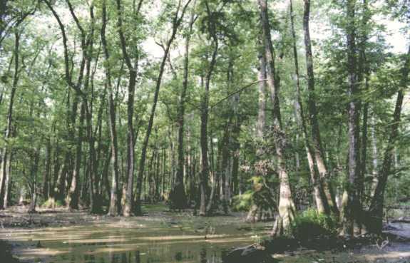 Mississippi River Flood Of 2011 A Publication Of The Vicksburg Post,Vicksburg MS