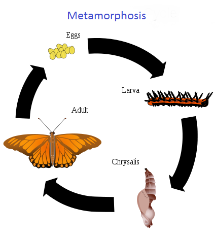 Healthy Eating Menu Plan furthermore All About Germination moreover Teaching Children Life Cycles as well Classification furthermore Painted Lady Butterfly. on plant life cycle kids facts